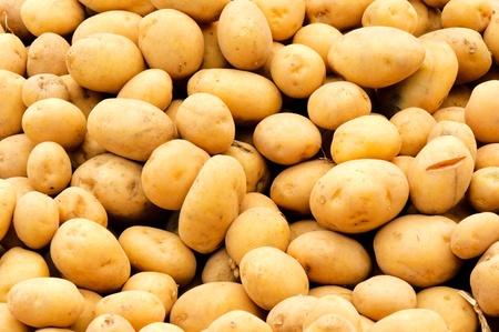 Fresh yellow potato full frame photo