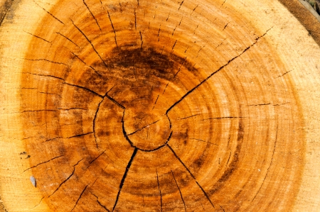 Cuted tree texture