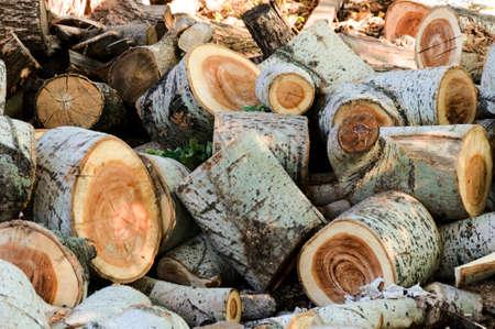 heaped: Heaped of cut logs