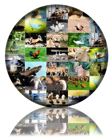 Animals photos in 3d ball photo