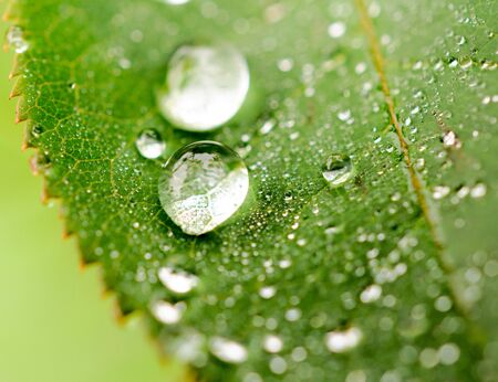 dewdrop: Selective focus on the dewdrop in the middle
