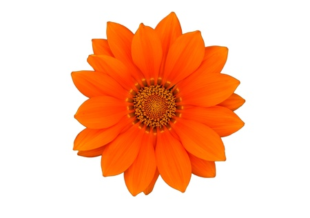 Orange flower Isolated on white background Stock Photo - 20381883