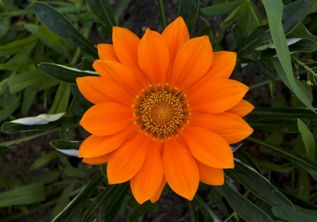Orange flower in green grass. Selective focus on the pollen in flower Stock Photo - 20500078