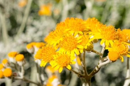 Macro shoot of the pollen on yellow flower Stock Photo - 20493371