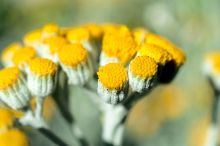 Macro shoot of pure pollen on the flower Stock Photo - 20493367