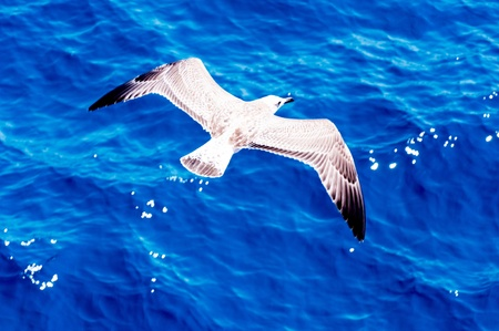 Seagull flying over the sea. Blured motion photo