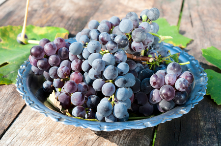 Black grapes in the metal plate Stock Photo - 23212742