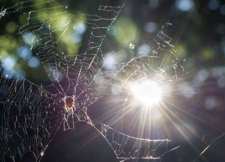 spider net: Closeup of spider net at a tree with sun in background Stock Photo