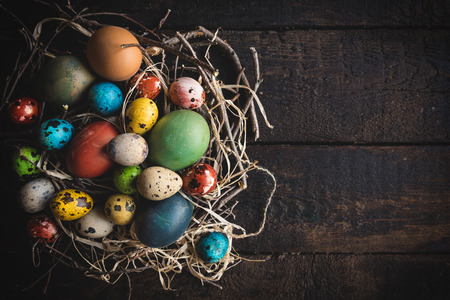 quail nest: Colorful Easter quail and chicken eggs in the nest,copy space Stock Photo
