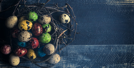 quail nest: Colorful quail eggs for Easter in the nest,selective focus and copy space