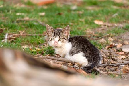 Little domestic cat outdoor,selective focus Zdjęcie Seryjne