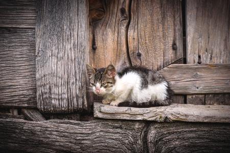 Little domestic cat on the wooden door,selective focus