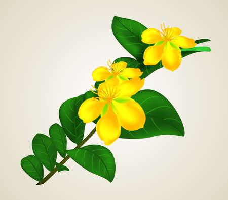 Beautiful Yellow Flowers with Leaves during the Spring Season.