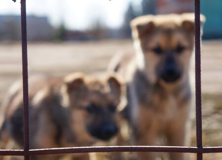 Two little cute stray dogs are sitting alone behind bars, looking at the camera and chasing you. Lost homeless pets without a master. Friendly dog lonely lost in the street, Cute dog stray