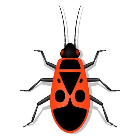 firebug: Red soldier bug with black spots on the back