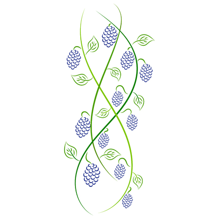 Doodle vector color abstract handdrawn vine grape Illustration