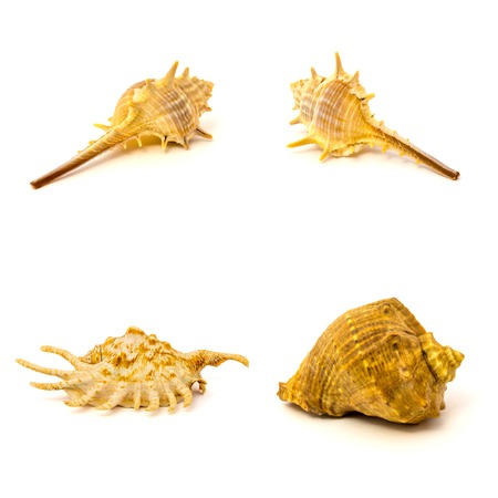 Set of sea shells isolated on a white background