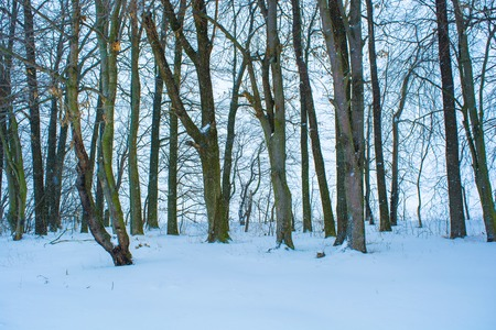 Photo of many winter trees near snowy field