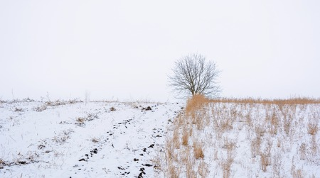 Photo of one tree without leaves on the field covered by snow in the winter