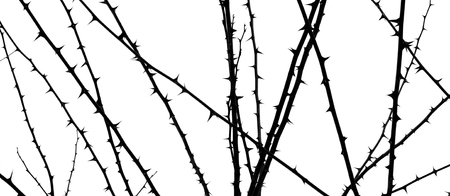 Photo of dark tree spines on acacia branch isolated on white background
