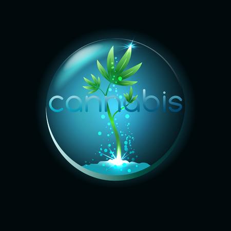 Cannabis emblem, logo for medical marijuana shop, vector illustration