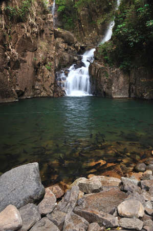 A school of Mahseer Barb fish in Pliew Waterfall National Park, Chanthaburi, Thailand  photo