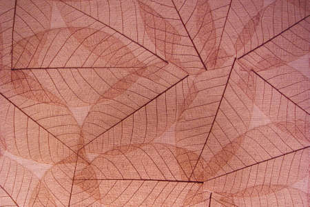 Brown transparent leaves paper background for decoration                                  photo