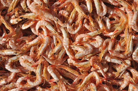 Dried shrimp, ingredient for cooking  Stock Photo - 13953826