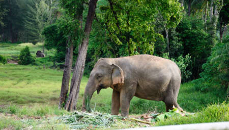An elephant in the forest Stock Photo - 14802275