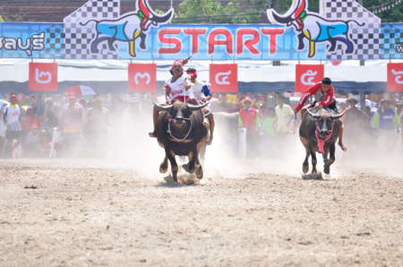 chonburi: Chonburi, Thailand – OCTOBER 29, 2012: Riders and their Buffalo are racing to win in World Buffalo Carnival.