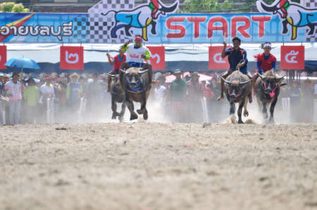 chonburi: Chonburi, Thailand – OCTOBER 29, 2012: Riders and their Buffalo are racing to win in Buffalo Racing Festival. Editorial