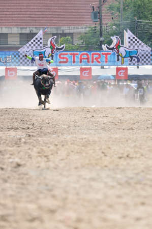 chonburi: Chonburi, Thailand – OCTOBER 29, 2012: Rider and his Buffalo are racing to win in Buffalo Racing Festival.