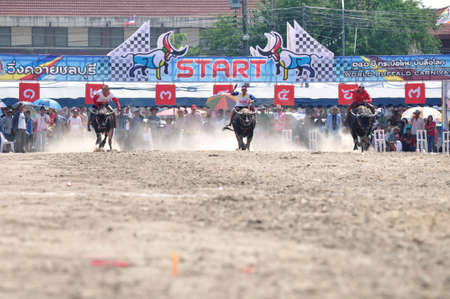 chonburi: Chonburi, Thailand � OCTOBER 29, 2012: Riders and their Buffalo are racing to win in Buffalo Racing Festival.