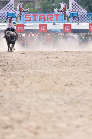 Chonburi, Thailand - OCTOBER 29, 2012: Rider and his Buffalo are racing to win in Buffalo Racing Festival.