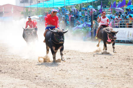 chonburi: Chonburi, Thailand - OCTOBER 29, 2012: Riders and their Buffalo are racing in order to win at Buffalo Racing Festival.