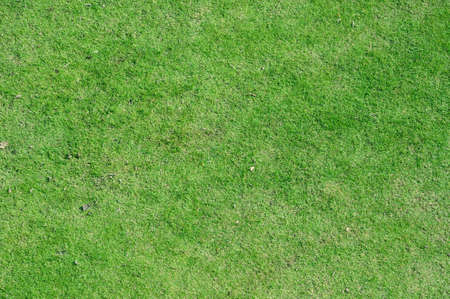 Beautiful green grass field texture in top view  photo
