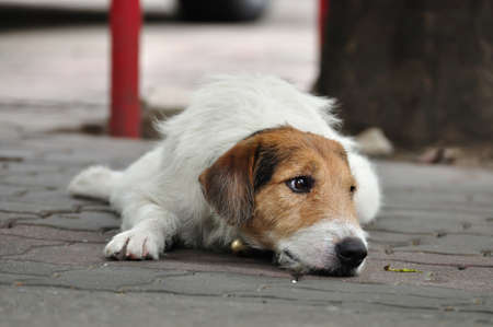 Lonely dog laying on street