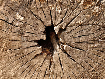 Annual ring  growth ring  of tree texture