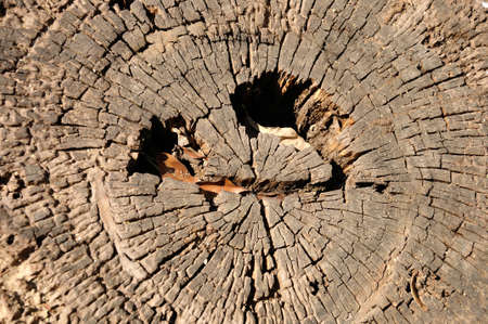 texture of annual ring  growth ring  of tree   photo