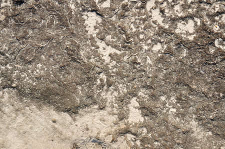 Texture of sedimentary stone pavement on the mountain