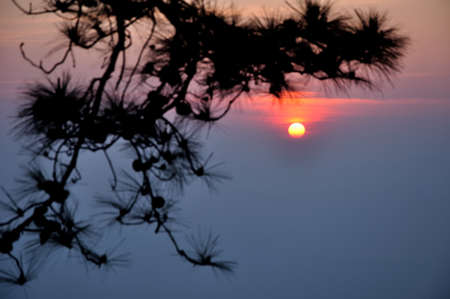 Sunrise with pine leaf as foreground at Makdook cliff, Phu Kradueng National Park, Loei, Thailand   Stock Photo