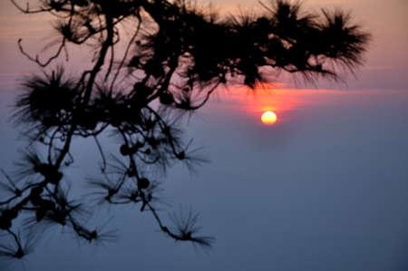 kradueng: Sunrise with pine leaf as foreground at Makdook cliff, Phu Kradueng National Park, Loei, Thailand   Stock Photo