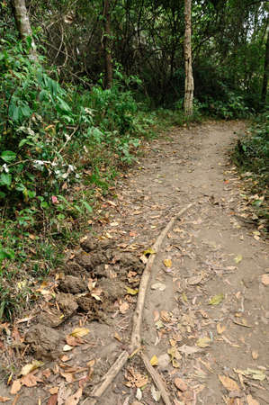 faeces: Elephant dung in forest at Phu Kradueng National Park, Loei, Thailand  Stock Photo