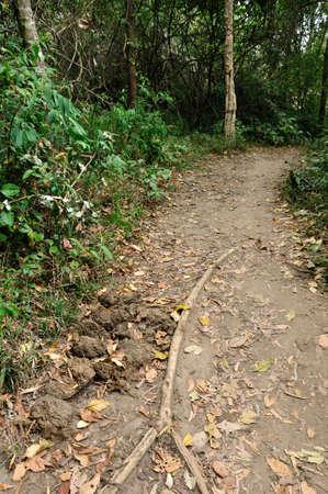 kradueng: Elephant dung in forest at Phu Kradueng National Park, Loei, Thailand  Stock Photo