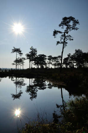 Silhouette of pine forest with reflection in sunny day  photo