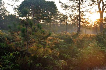 Morning light shines on the forest at Phu Kradueng National Park, Thailand