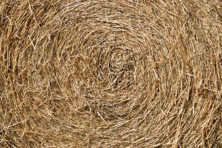 rick: Texture of rick or straw  Stock Photo
