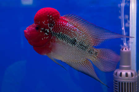 Cichlid fish. photo