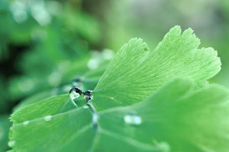 Dew water on the fern leaf  photo