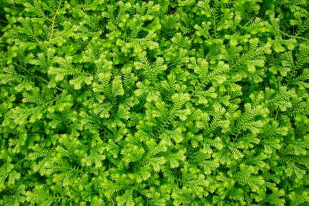 Texture of green fern leaf  photo